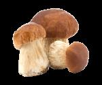 L'autunno è la stagione dei funghi: consigli per la raccolta, il consumo e la conservazione