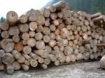 Indagine di mercato per ritirare del materiale legnoso (pioppo ibrido) nella Riserva Naturale Monticchie