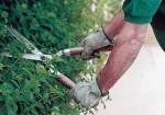 Indagine di mercato per l'affidamento del servizio di manutenzione del verde pubblico (marzo-aprile 2014)