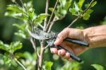 Indagine di mercato per l'affidamento del servizio di manutenzione straordinaria di alberi ed arbusti: abbattimenti, potature, rimozione ceppaie